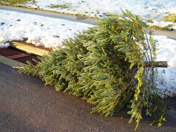 Christmas-Tree-at-Curb