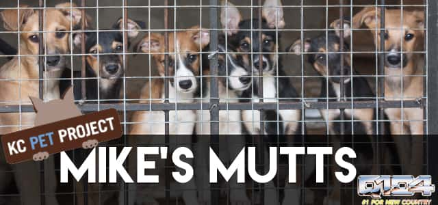 mike's mutts