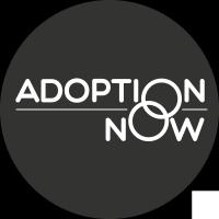 Adoption Now