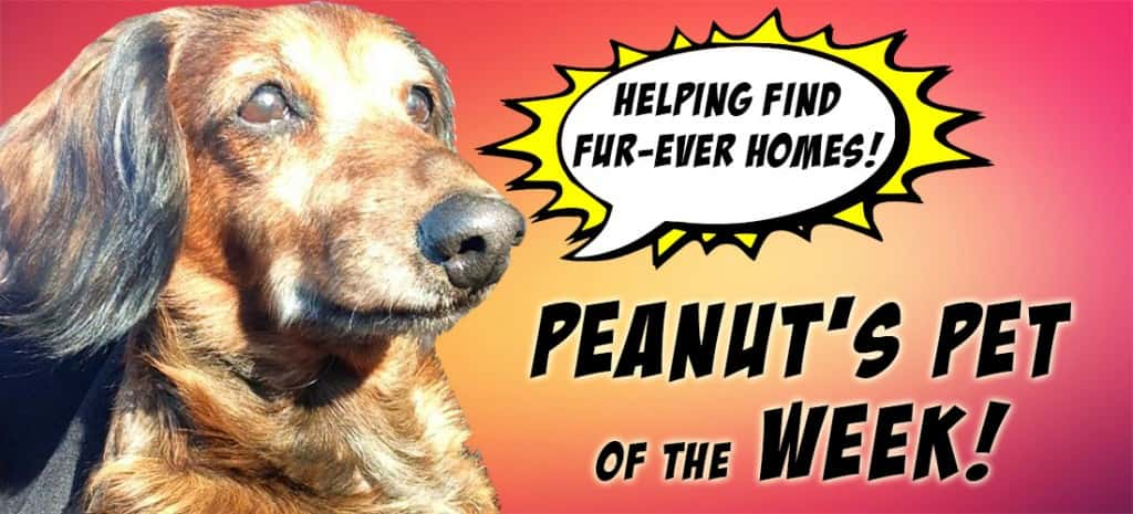 Peanut's Pet of the Week