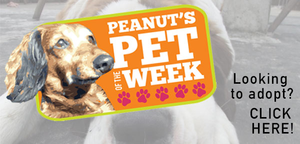 Peanut's Pet of the Week
