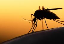ZikaCouldBecomeandExplosivePandemic..jpg