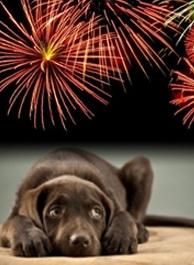 pets-fireworks.jpg