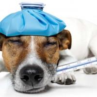 dog-flu.jpg