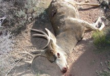 With Utah's hunting seasons in full swing, please keep your eyes open for violations or anything that doesn't seem right.  For example, if someone shoots a deer and then leaves the animal where it fell, call the UTiP hotline.