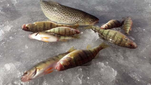 A free clinic in Farmington will teach you all you need to know to catch plenty of fish this winter.