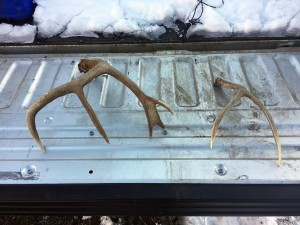 DWR officers seized these shed antlers from the person who illegally collected them.  The person who collected them now faces a fine of up to $1,000.