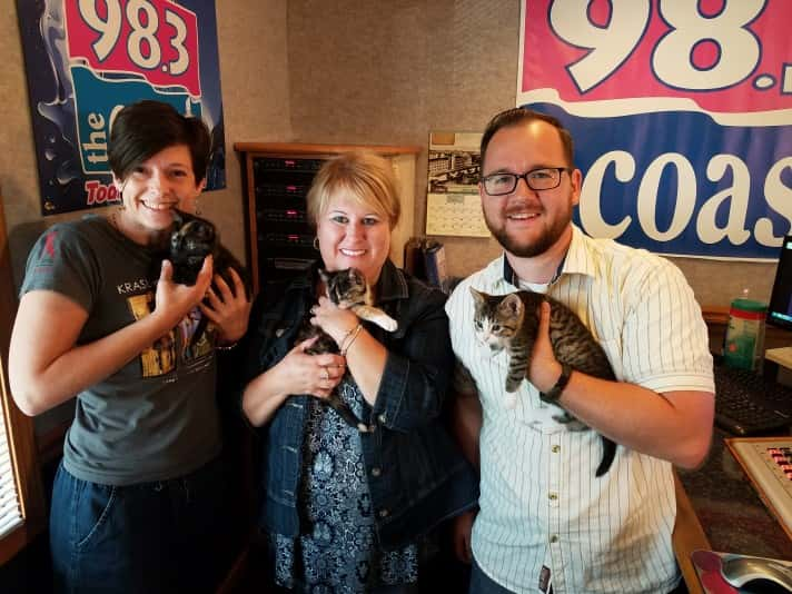 Trio of Kittens!