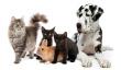wpid-Pets.jpg