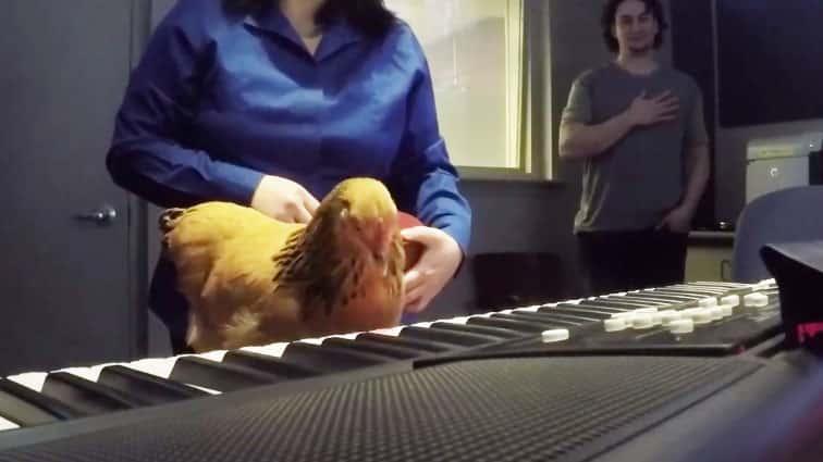Jokgu The Chicken