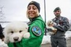 Rescue-of-3-puppies-gives-hope-for-more-survivors-in-Italy-avalanche_t