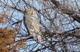 Horned Owl Agate 11-09 2 (1)