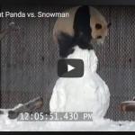 snowmna