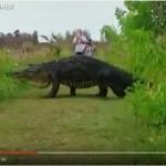 FI-big gator