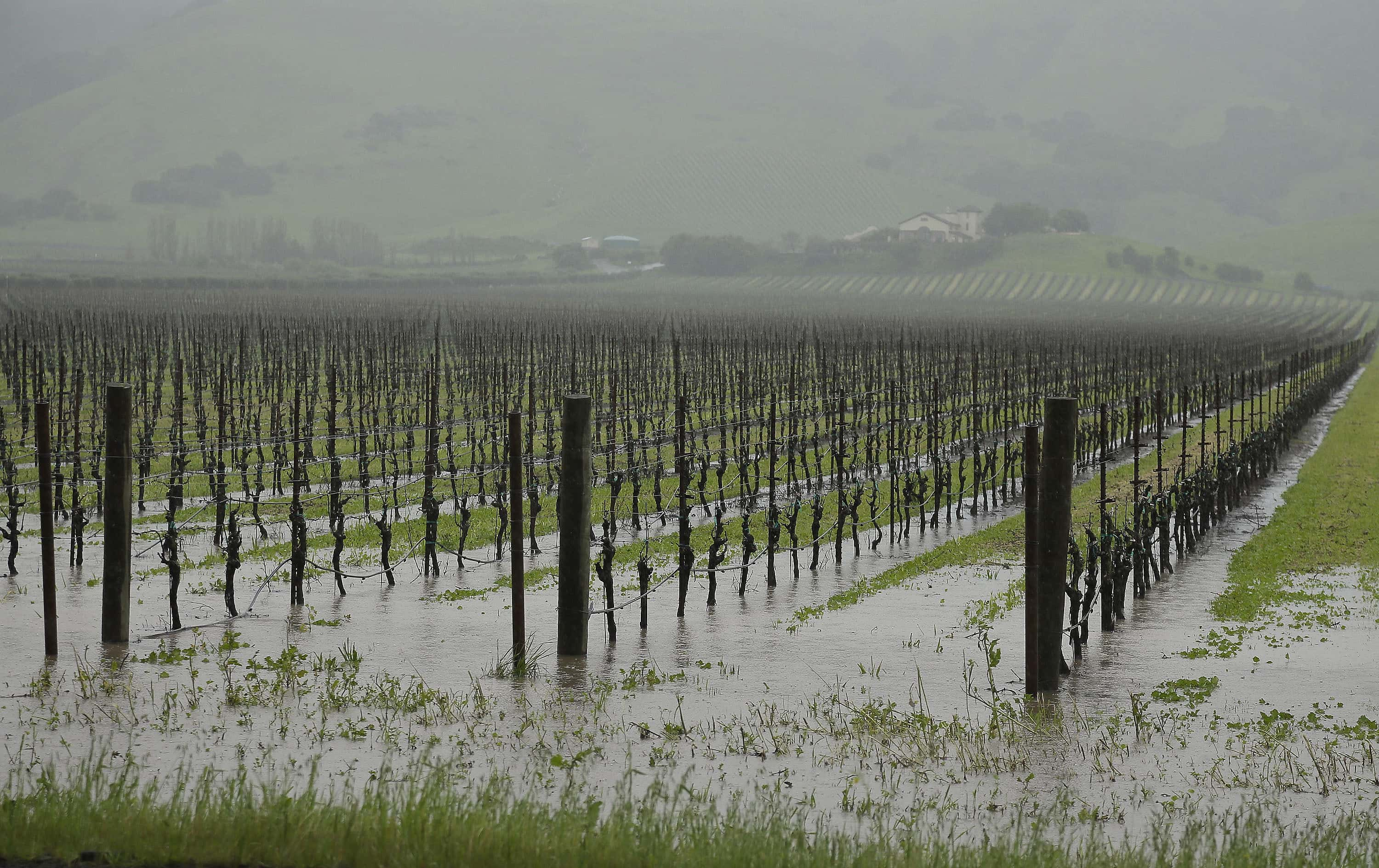 FILE - In this March 10, 2016, file photo, runoff from heavy rain flows into vineyards along Highway 121 with the Gloria Ferrer Caves and Vineyards in the background in Sonoma, Calif.  A heavy dousing of autumn rain in Northern California has lifted a quarter of the state out of drought, the highest percentage in more than three years, according to a new federal report. Water officials who oversaw mandatory water conservation by cities and towns emphasized three-fourths of the state remains in the five-year drought. (AP Photo/Eric Risberg, File)