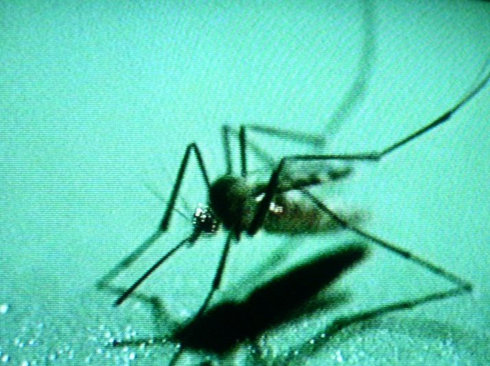 Mosquitoes test positive for West Nile Virus in Franklin County