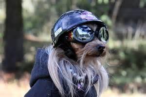 biker dog 3