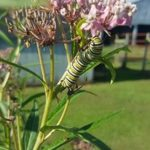 Lindsey-Payne-from-Sparta-Caterpillar_1471873293747_44764304_ver1.0_900_675