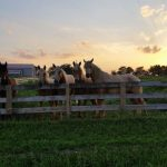 Sandi-Ackels-Williams-Horses-in-the-Ozarks_1470059029521_43475416_ver1.0_900_675