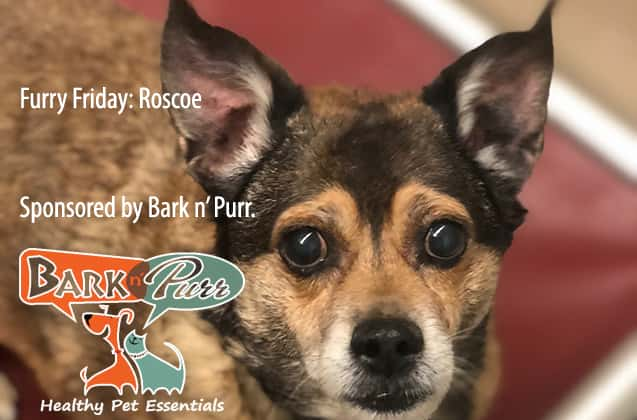 #Adopt Roscoe