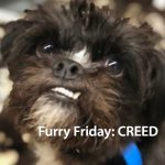 Adopt Creed