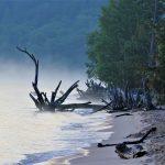 Sand-Point-Driftwood-Dragon