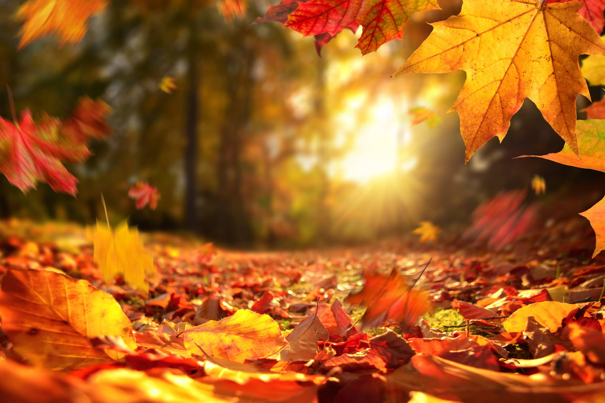 Fall Foliage Map Predicts The Best Time To See Leaves At Their Peak Colors Carina Kfdi Country 101 3 Kfdi