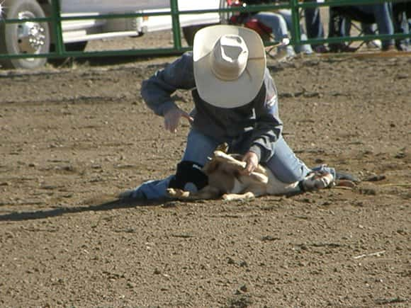 Hundreds Expected In Jamestown For Roughrider Rodeo