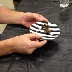 Tarantula: Chocolate covered.