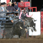 rock-n-roll-fantasy-by-peggy-gander-bcfr-2020: Rock N Roll Fantasy, a bull owned by Sutton Rodeo, is ridden by Chance Schott at the 2020 Badlands Circuit Finals Rodeo. Schott went on to win the circuit, and the bull was awarded the 2020 Badlands Bull of the Finals Award. Photo by Peggy Gander, Cowboy Images.