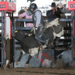 the-preacher-by-peggy-gander-bcfr-2020: The Preacher, a bull owned by Bailey Pro Rodeo, gives bull rider Jeff Bertus all he can handle in the first round of the Badlands Circuit Finals Rodeo. The bull is the 2020 Badlands Bull of the Year. Photo by Peggy Gander, Cowboy Images.