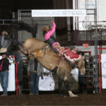 colo-bulldog-by-peggy-gander-bcfr-2020: Shane O'Connell ties for second place on the horse Colorado Bulldog, in the first round of the 2020 Badlands Circuit Finals. The horse is the 2020 Badlands Bareback Horse of the Year and is owned by Fettig Pro Rodeo. Photo by Peggy Gander, Cowboy Images.