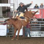 onion-ring-by-peggy-gander-bcfr-2020: Tate Thybo attempts an eight second ride on Korkow Rodeo's Onion Ring. The horse won the Badlands Saddle Bronc of the Year award, given at the circuit finals in Minot Oct. 9-11. Photo by Peggy Gander, Cowboy Images.