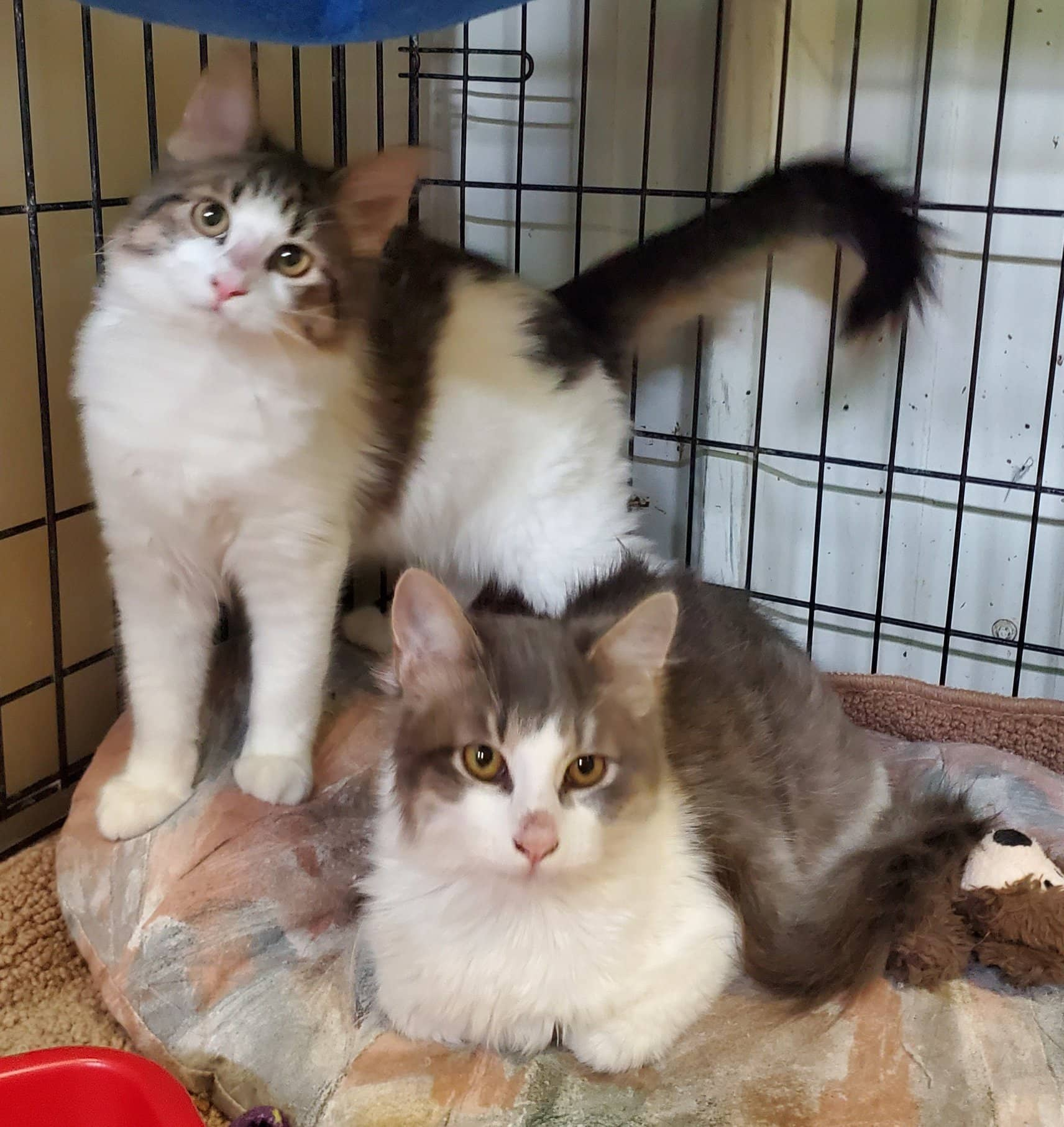 K-HITS Erath County Pets OF The Week!