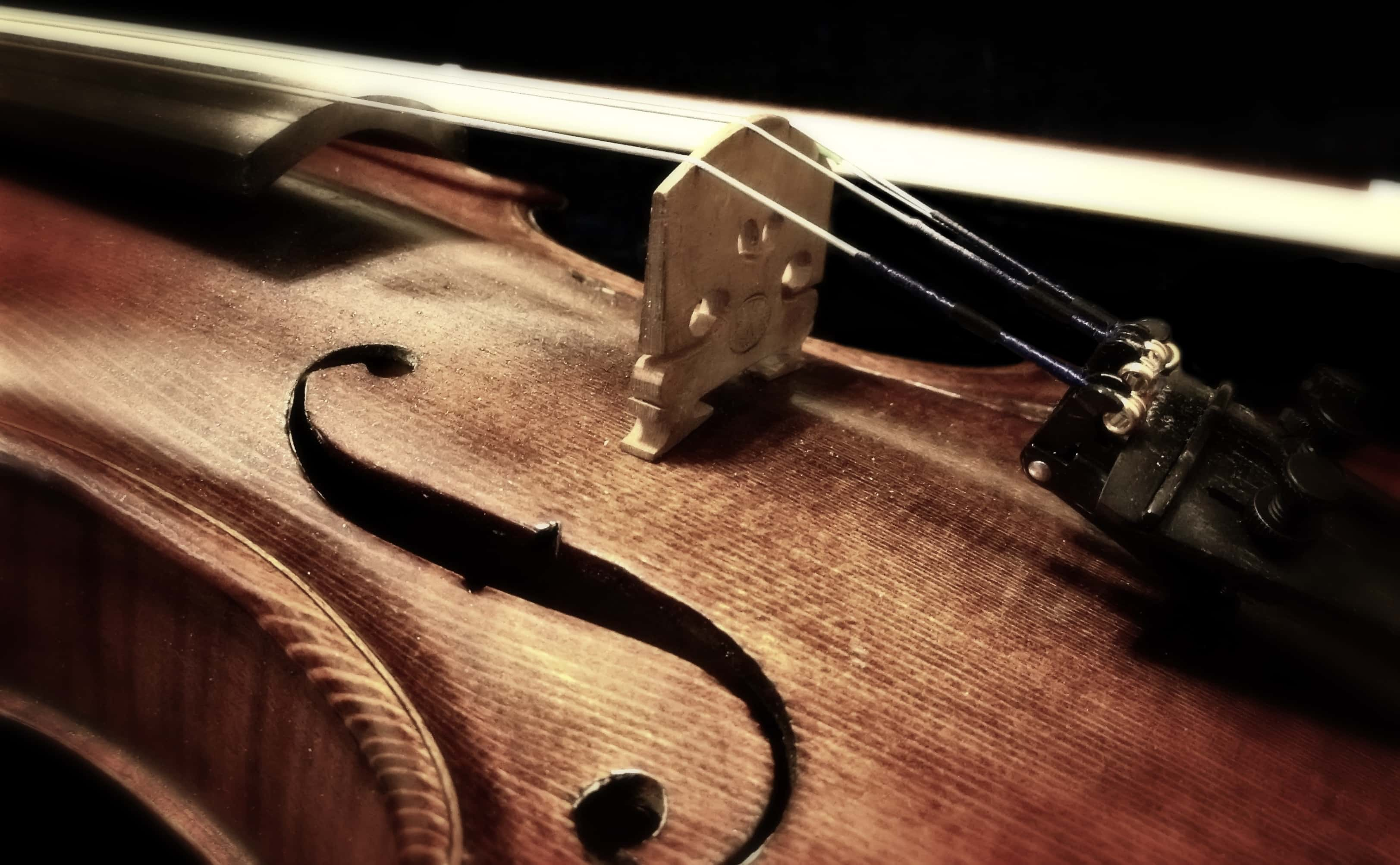 Close-up of violin