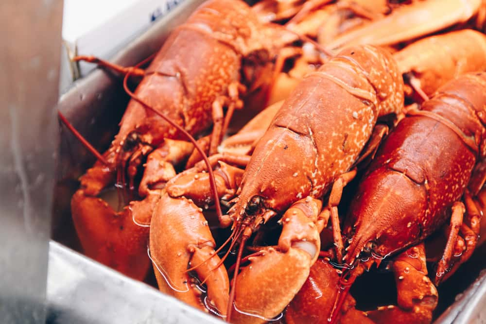 Maine Man Sued for Embezzling $1 5 Million Worth of Lobster