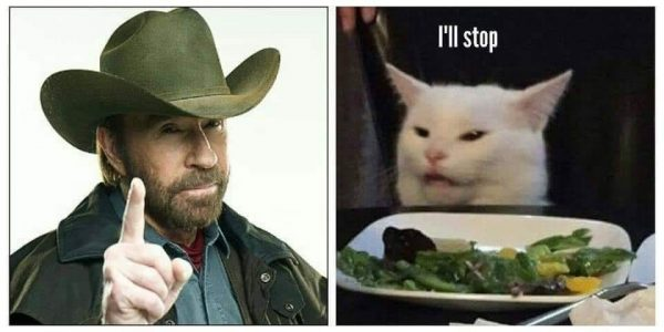 Image result for cat chuck norris meme