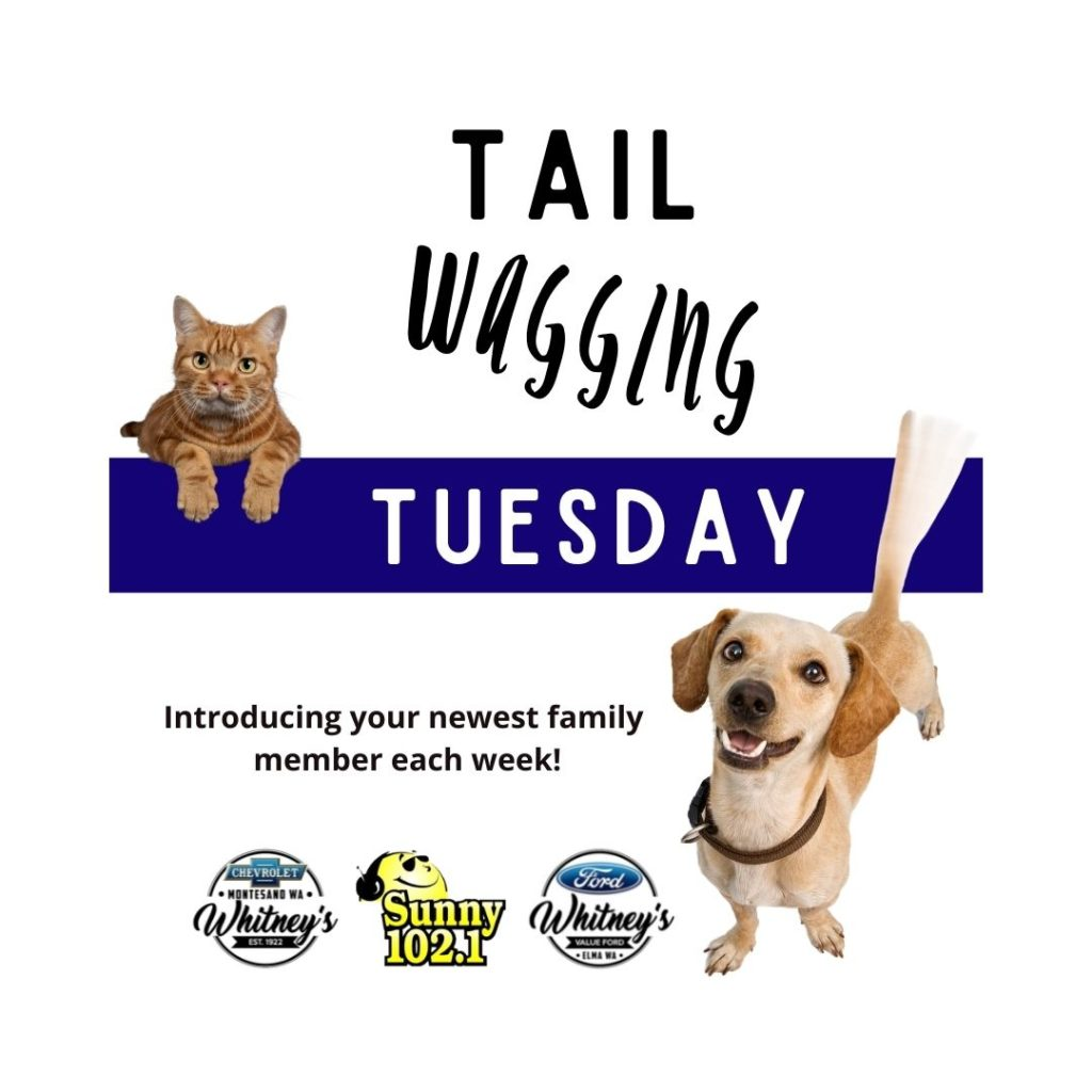 Tail Waggin Tuesday