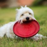 12 Keeping Balls And Frisbees That Land In Your Yard: Things You Start to Do as an Old Man