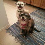 Toofus And Goldie: toofus