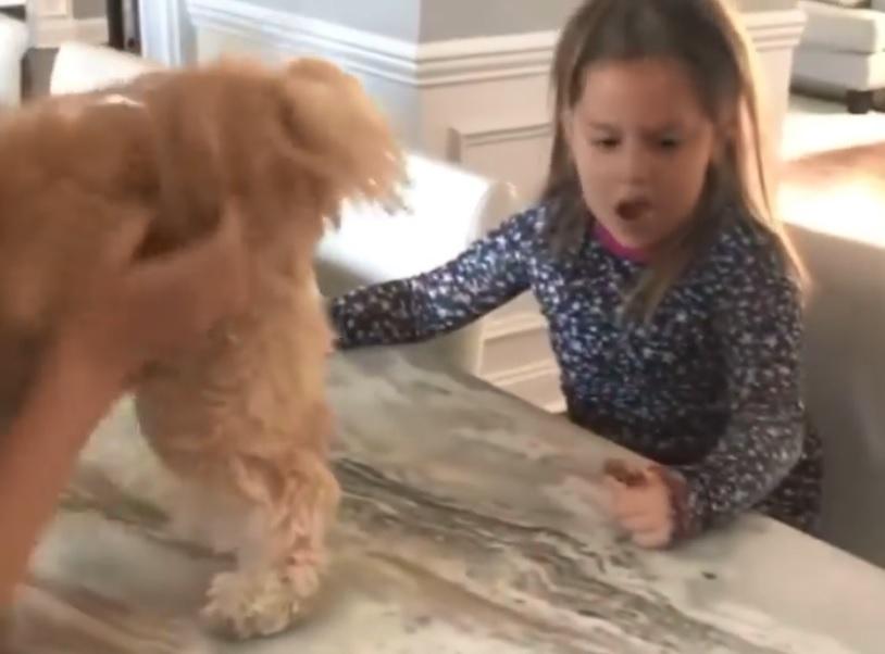 kid and dog prank