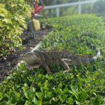 Lizard-friend