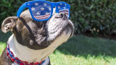 dog wearing fourth of july themed sunglasses