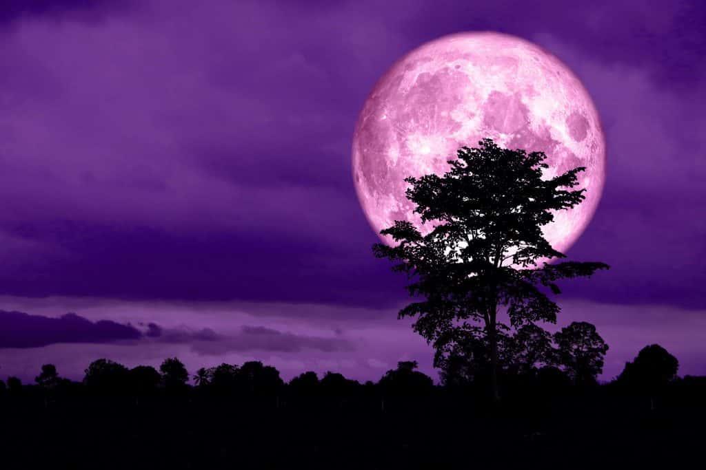 full moon and purple night sky