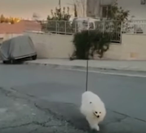 Drone walks dog amid coronavirus lockdown in Cyprus