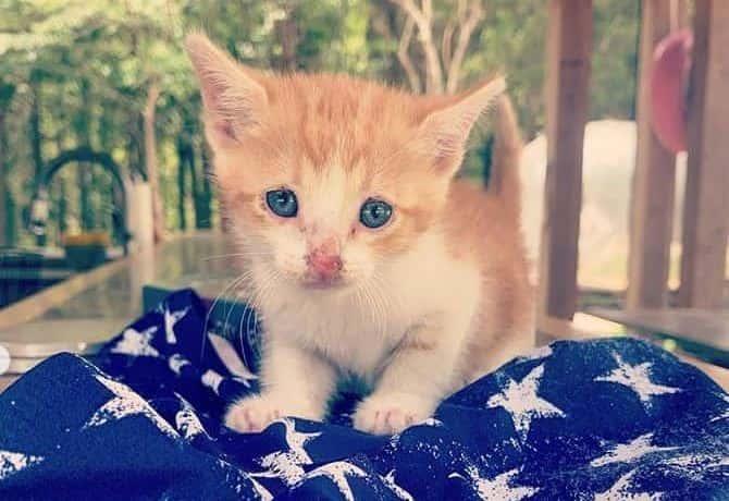 Miranda Lambert's rescue kitten