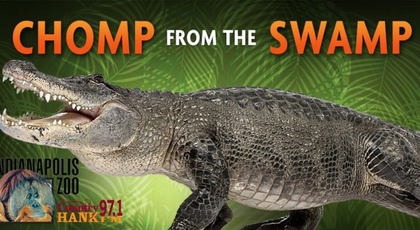 A Gator looking like he is going to chomp, marketing for the Indy Zoo exhibit