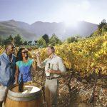 people tasting wine in the vineyard