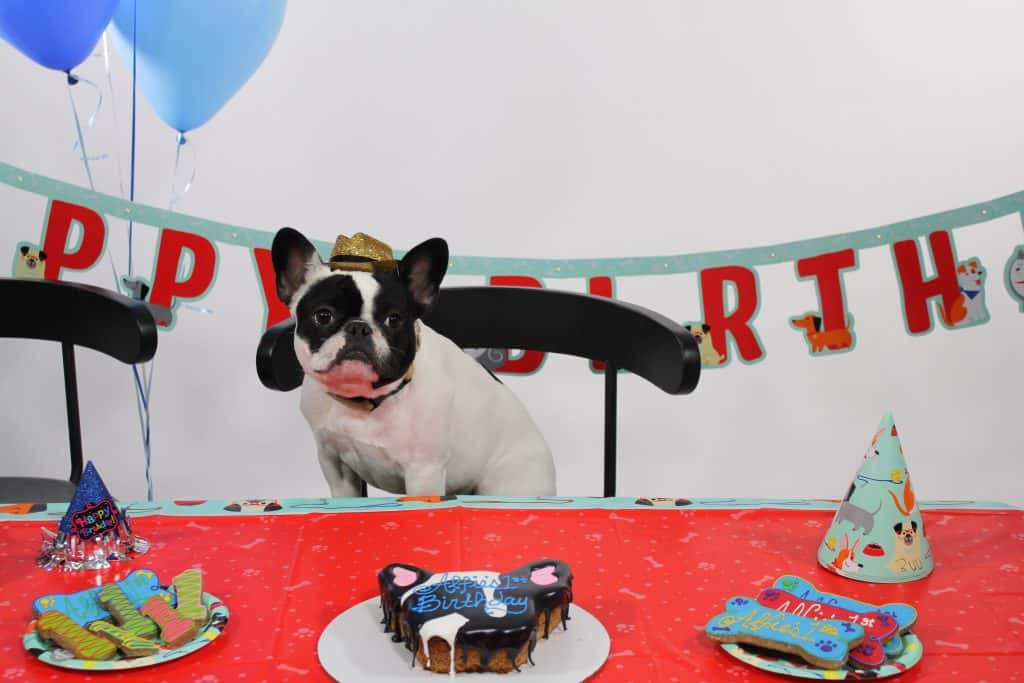 Alfie's Birthday Party!
