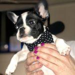 #TBTwJnD Alfie: Alfie in a Bowtie